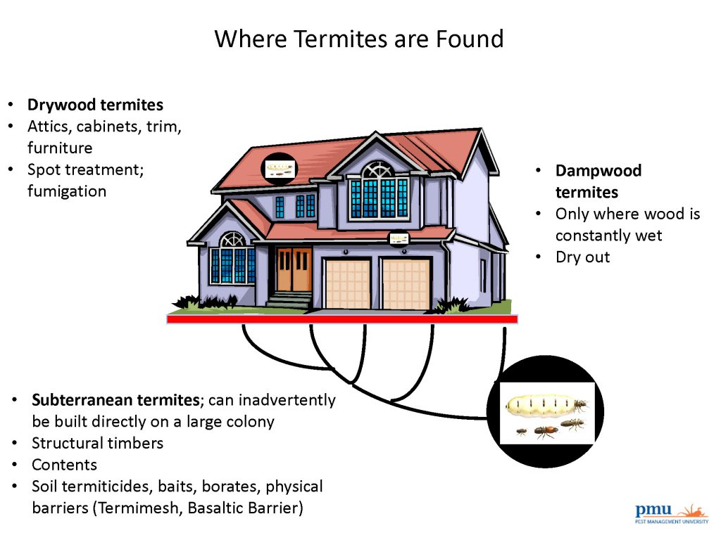 Where termites can be found in homes.