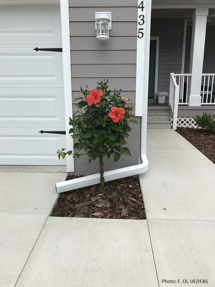 Improper plant placement and poor gutter placement.