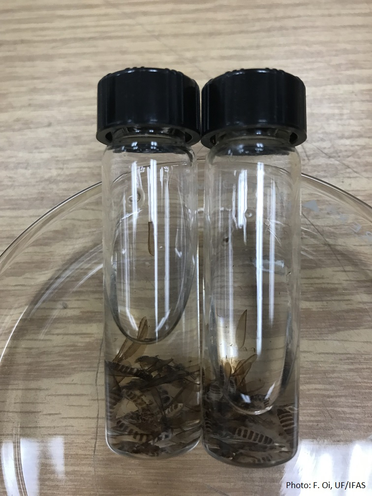Place termite sample in a vial with rubbing or 70% isopropyl alcohol. Make sure the vial does not leak.